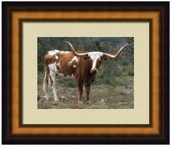 Pancho - Longhorn Art