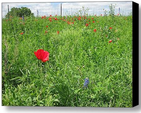 Red Cornflower Poppy Art