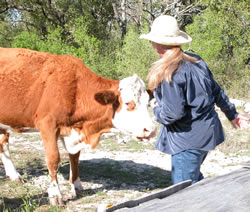 Kathy to cow: Do you want this treat or not?
