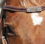 Horse Headstall Name Plate