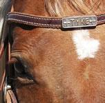 Horse Headstall Name Plate